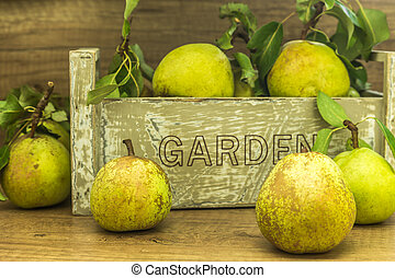 fresh organic green pears from the garden, some pears in...