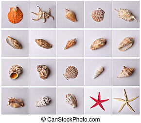 Group of sea shells isolated on pattern and gray background....
