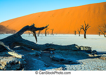Ecotourism in Namib-Naukluft Park - The bottom of dried lake...