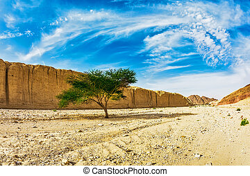 The stone desert in Eilat mountains - Majestic beginning of...