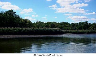 Summer nature forest lake landscape
