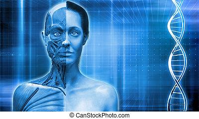 medical anatomy background