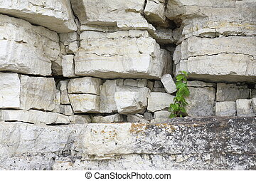 a strong and persistent sprout - small sprout tree on rough...