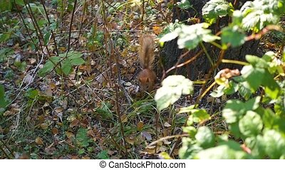 squirrel in the woods near a tree
