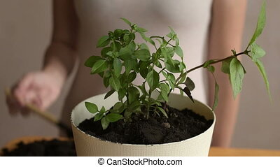 Putting dirt into flowerpot with sprout - Woman putting dirt...