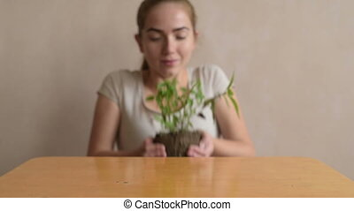 Putting basil sprout on the table - Woman putting basil...