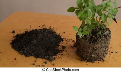 Preparing dirt for planting