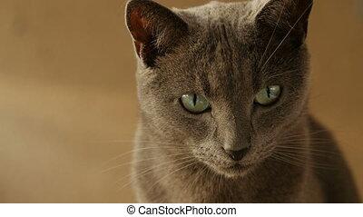 Close up portrait of cute cat.