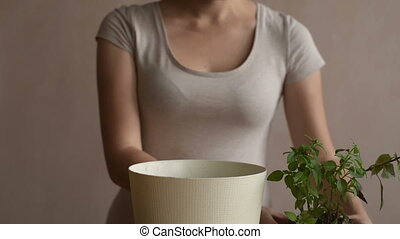 Woman putting sprout into a flowerpot
