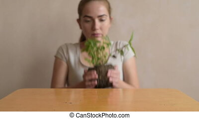 Woman putting sprout on the table - Woman putting basil...