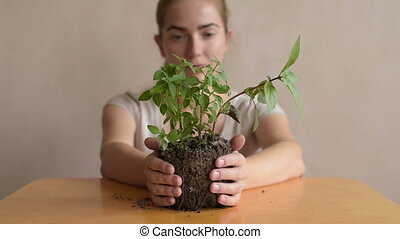 Woman removing sprout from the table - Woman removing basil...