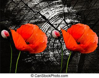 poppies on a dark background