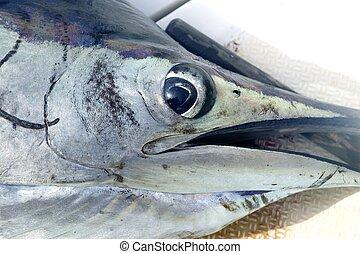 Sailfish face macro closeup detail eye and mouth