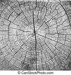Cross-sectional view of a log cut end wooden texture