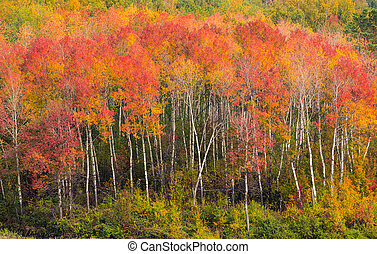 Fall bright colorful forest landscape
