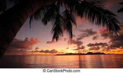 beautiful sunset with palmtree - colorful sunset behind...