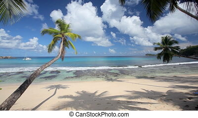 beautiful beach with palmtrees - deserted sandy beach with...