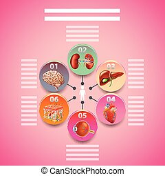 Science infographics with human organs in circles vector...