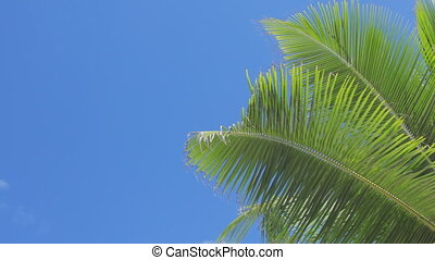 palmleaves at blue sky - palmleaves in the wind