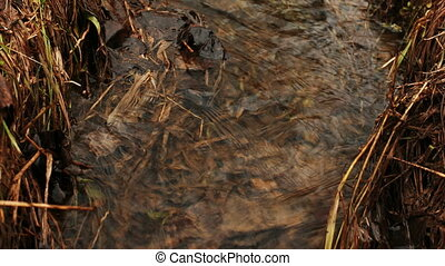 Flowing water in a creek - Water flow in a creek with dry...