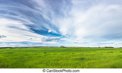 Green Field In Spring Season. Agricultural Rural Landscape...