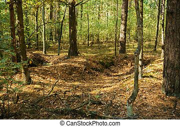 Old World War Trenches In Forest Since Second World War,...