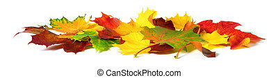 Autumn leaves in vivid colors on white
