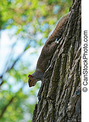 Fluffy squirrel on the tree in the park - Small animal was...