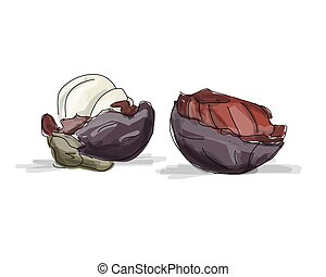 Mangosteen, sketch for your design. Vector illustration