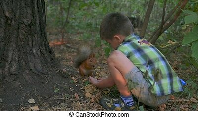 little child feeding a squirrel with his hands