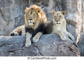 Lions on a Rock - Male and female lion sitting on a rock