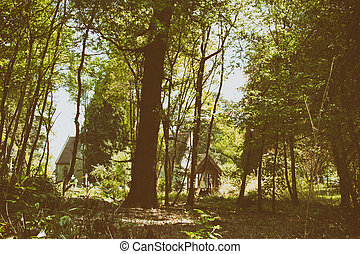 Church surrounded by trees in the woods