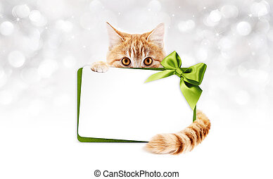 ginger cat with gift card and green ribbon bow
