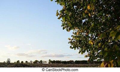 Wind rustles leaves. tree leaves fluttering and rustling in...