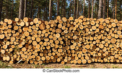 Trees chopped and stacked in forest - Forest destroyed by...