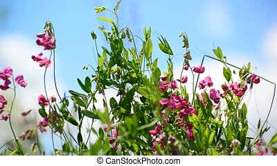 Beautiful meadow with wild flowers on sky background, Russia