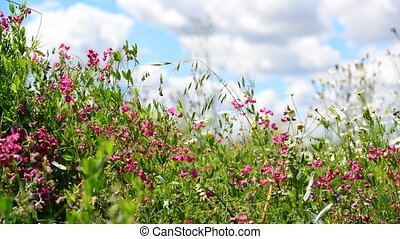 Beautiful meadow with wild flowers on sky background, Russia...