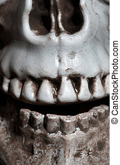 Close-up photo of the human skull - Close-up vertical photo...