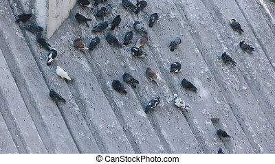 Pigeons in park on inclined plane - On an inclined plane...