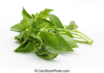 Hoary basil or lemon basil