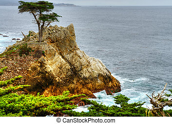 Lone Cypress Tree - Lone cypress tree at Big Sur California