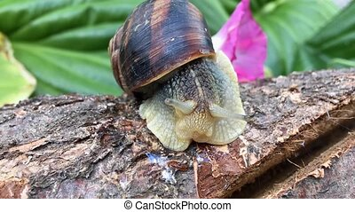 Snail on a log space palpates his mustache, timelapse -...