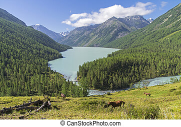 Kucherla lake. Altai Mountains, Russia.