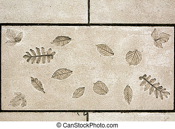 marks of leaf on the concrete - concrete slab with the...