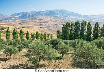 Inland landscape of Sicily in summer day, Sicily island...