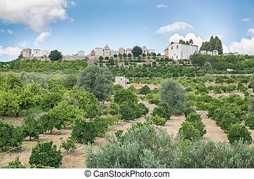 Orchard on the island of Sicily, Italy - Orchard lime,...