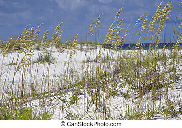 Sea Oats at Turqouise Blue Beach in Florida - Golden sea...