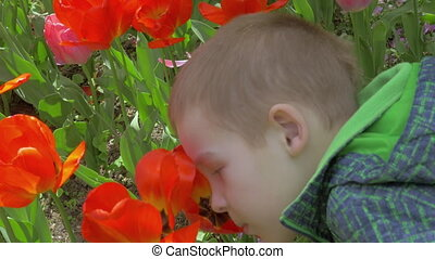 On a sunny day a little boy in the garden smelling the...