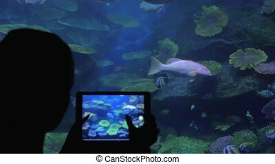 Woman taking fish pictures with pad in oceanarium -...
