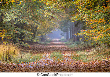 Autumn lane with Beech
